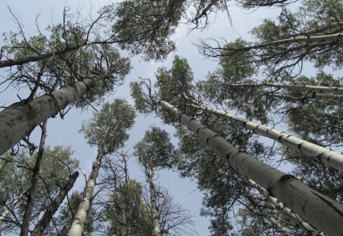 Land Manager's Guide to Aspen Management in Oregon