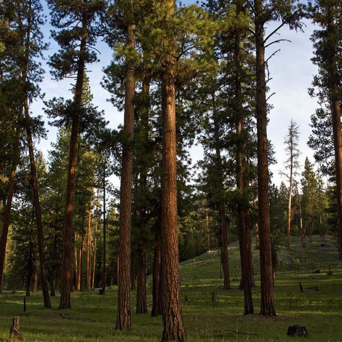 resilient healthy forest ochoco oregon