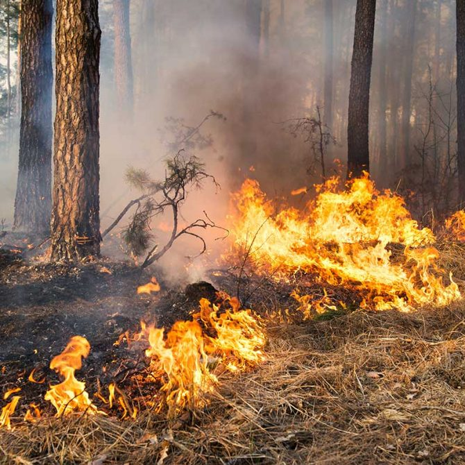 prescribed fire forest restoration ochocos