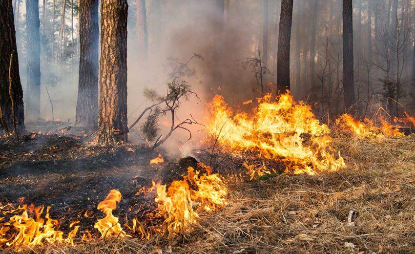 prescribed fire forest restoration ochocos